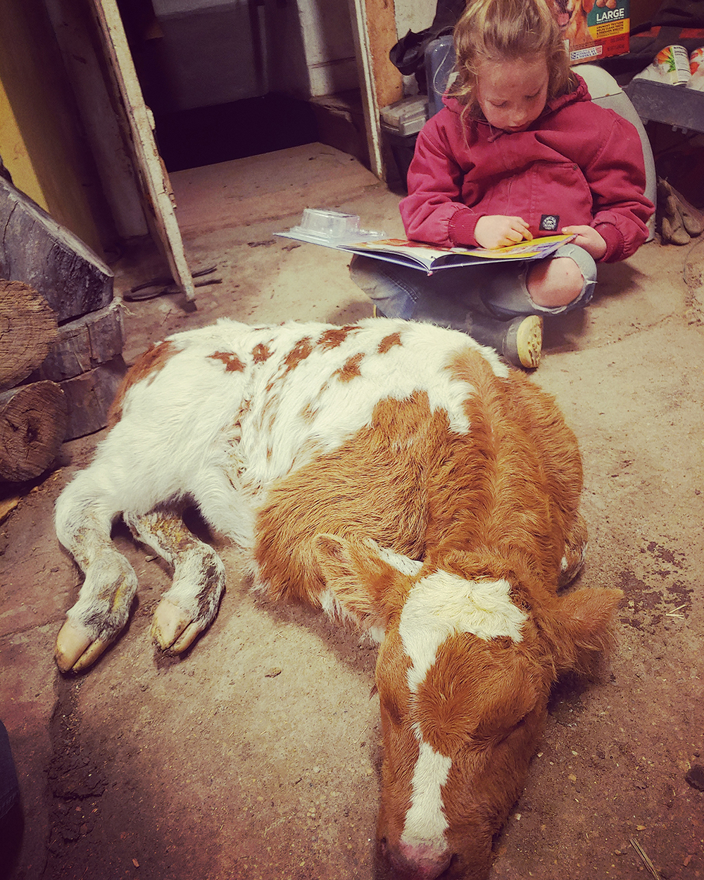 "Tif Kais showed her daughter Kimber reading to a cold calf by the wood stove. Nothing hasnt changed much for us with this COVID19, she said. ""Just another day on the ranch."""